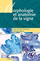 Morphologie et anatomie de la vigne